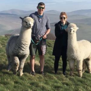 Alpaca treks at Bamburgh Castle